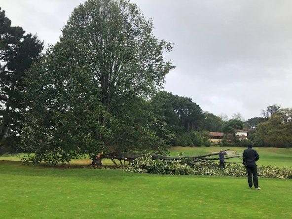Ábrol caído en el Real Club de Golf de Pedreña tras las fuertes rachas de viento sufridas durante el fin de semana.